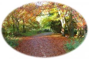 Clement Wilson Park_autumn